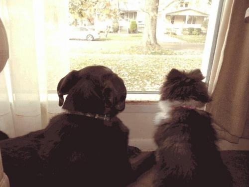 Murphy and Belle -